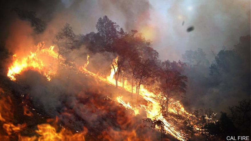 18 million trees died in California raising concern for upcoming fire season