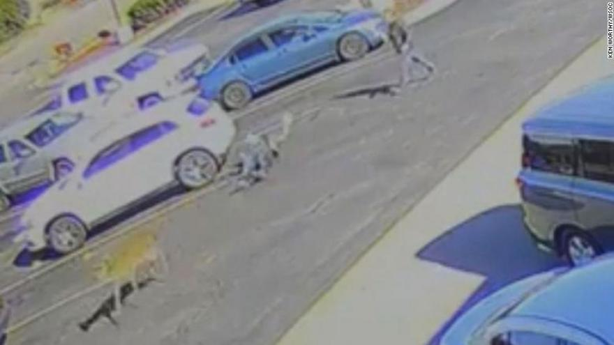 Deer tramples man in a McDonald's parking lot