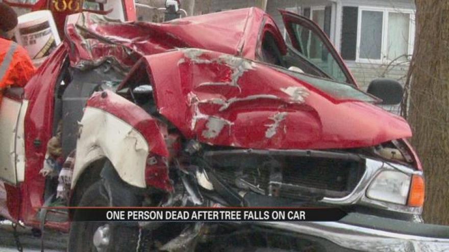Falling tree hits moving vehicle, killing 16-year-old boy