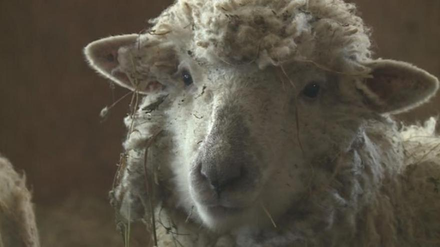Local fire department helps save the life of a sheep stuck
