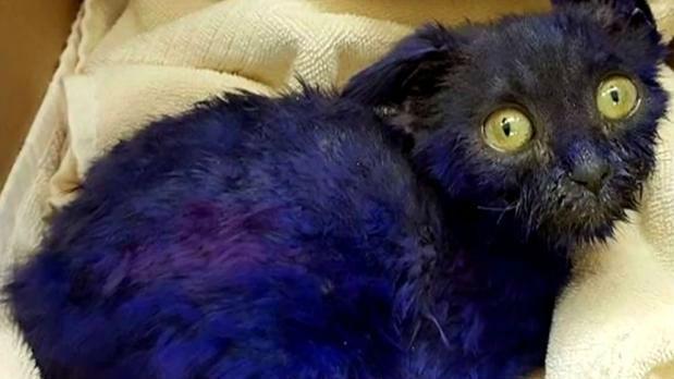 Purple-dyed kitten used as