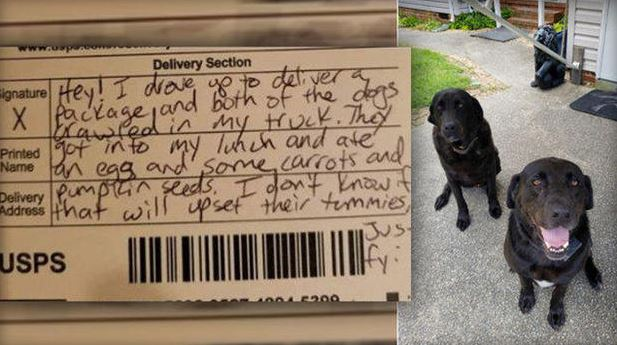 dogs steal mail carrier 39 s lunch then their apology goes viral. Black Bedroom Furniture Sets. Home Design Ideas