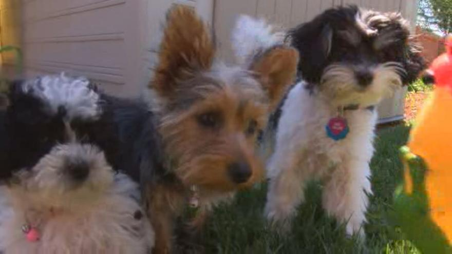 California to become first state to ban retail sale of pets