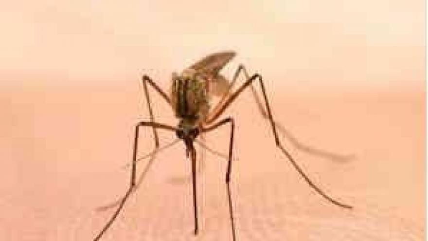 West Nile virus found in St. Louis mosquitoes