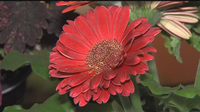 The Realtors Home And Garden Show Starts Friday In Milwaukee