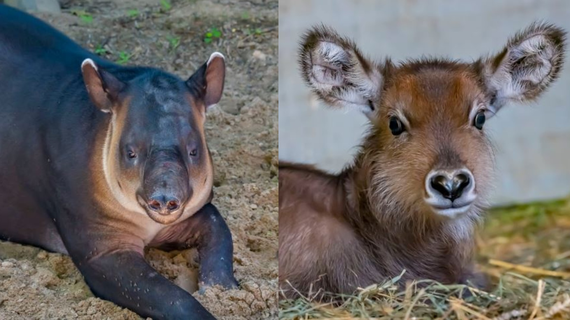 Milwaukee County Zoo welcomes new arrivals