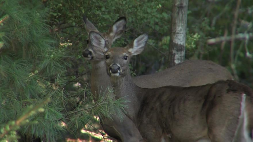 Wisconsin Deer Stands Damaged Animal Rights Group Suspected